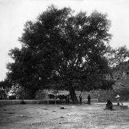 Pollancre situat en l'ermita de la Verge del Remei, de Xelva.- ca. 1917.