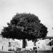 Vell om situat en la plaça Major d'Ares d'Alpont.- ca. 1917.